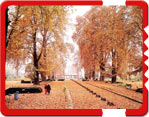 Kashmir Travel Guide, travel to srinagar, srinagar hotels, srinagar city guide, travels tips srinagar